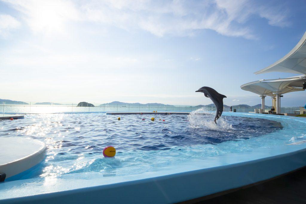 瀬戸内海をバックにジャンプするイルカ(四国水族館)